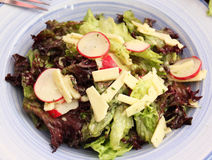 Mixed salad with cheese and radish Royalty Free Stock Images