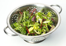Mixed Salad leaves Royalty Free Stock Photography