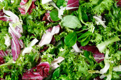 Mixed salad leaves  frisee, radicchio and lamb's lettuce. Background, texture.  Stock Photography