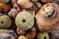 Mixed Sea Shells Royalty Free Stock Image