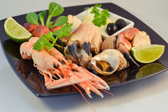 Mixed seafood. Delicacy healthy dinner seafood Stock Photography