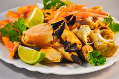 Mixed seafood. Delicacy healthy dinner seafood background Royalty Free Stock Photo