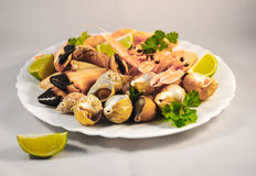 Mixed seafood. Delicacy healthy dinner seafood background Stock Photos