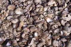 Mixed Seashells. On the beach Stock Photo