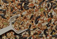 Mixed seeds for parrot food. stock photo