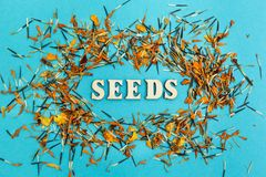 Mixed seeds and petals of flowers on a blue background, the word stock photography