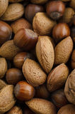 Mixed Selection of Nuts in Shells from Above Royalty Free Stock Photos