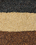 Mixed sesame seeds background Royalty Free Stock Photo
