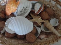 Mixed shells in a basket stock image