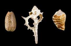 Mixed shells. Isolated on black Royalty Free Stock Image