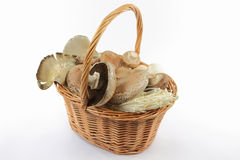 Mixed sorts Organic mushrooms. Stock Image