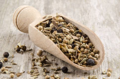Mixed spices on a spoon Stock Photography