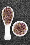 Mixed Sprouting Seeds Royalty Free Stock Image