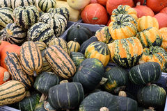 Mixed squashes Royalty Free Stock Photo