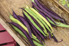 Mixed String Beans. Image of Mixed String Beans stock photography