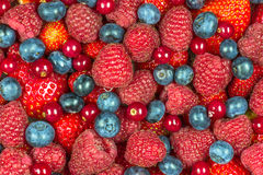 Mixed summer berries background Stock Images