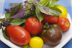 Mixed tomatoes with Purple and Green basil leaves. Stock Photo