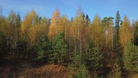 Mixed tree forest in autumn. In autumn day stock video