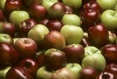 Mixed varieties of apples Royalty Free Stock Photo