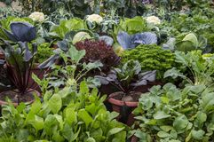 Mixed vegetable plants. In the home garden stock photo