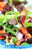 Mixed vegetable salad Stock Photography