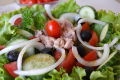 Mixed vegetable salad with tuna and olive oil Royalty Free Stock Photo