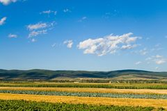 Mixed vegetables field. In summer Royalty Free Stock Photos