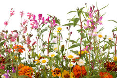 Mixed wild field flowers Royalty Free Stock Photo