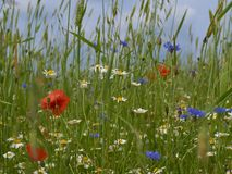 Mixed wildflowers in the field stock image
