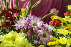 Mixed yellow pink flowers Stock Photography
