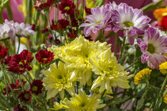 Mixed yellow pink flowers. With water sprayed Royalty Free Stock Photos