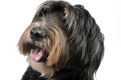 Mixedbreed dog in a white background. Dog studio portrait in studio Stock Photo