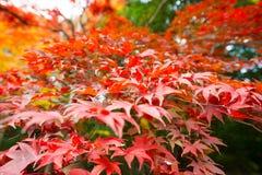 Mixen färgade leaves royaltyfri bild