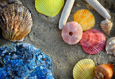 Mixing colorful of shell fish on the beach. Whit space for text in sunset lighting one side low light and dark shadow Stock Image