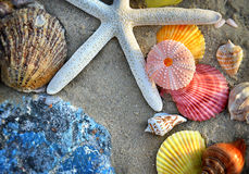 Mixing colorful of shell fish on the beach. Whit space for text in sunset lighting one side low light and dark shadow Royalty Free Stock Images