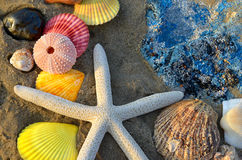 Mixing colorful of shell fish on the beach. Whit space for text in sunset lighting one side low light and dark shadow Royalty Free Stock Photography