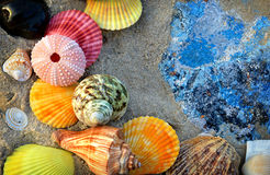 Mixing colorful of shell fish on the beach. Whit space for text in sunset lighting one side low light and dark shadow Royalty Free Stock Image
