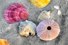 Mixing colorful of shell fish on the beach. Whit space for text in sunset lighting one side low light and dark shadow Stock Photography