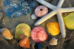 Mixing colorful of shell fish on the beach. Whit space for text in sunset lighting one side low light and dark shadow Royalty Free Stock Photo