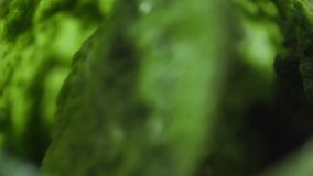 Mixing pesto sauce in slow motion close-up macro stock video footage