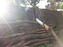 Mixing of violation. Nicotine & sun ray. meet Stock Photo