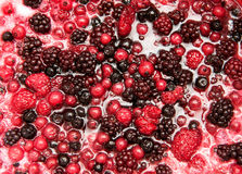 Mixture of autumn berries for flavouring ice cream Royalty Free Stock Images