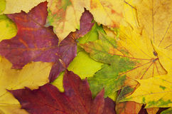 Mixture of Autumn leaves Royalty Free Stock Photo