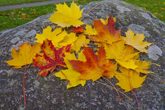 Mixture of Autumn leaves Stock Images