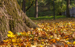 Mixture of Autumn leaves with great range of colors Royalty Free Stock Images