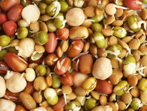 Mixture of beans Royalty Free Stock Image