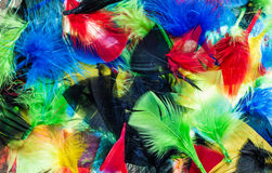 Mixture Color Feathers Stock Photo