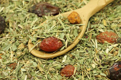 A mixture of dried herbs and wild berries in wooden spoon Stock Image