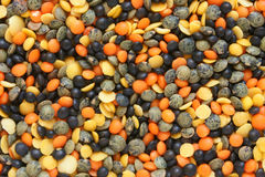 Mixture of dried lentils Royalty Free Stock Photo