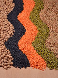Mixture of dried lentils and beans Royalty Free Stock Photo
